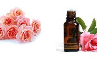 Всё о масле розы — чудесные свойства и применение