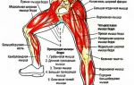 Упражнения для похудения ног и стройных бедер — эффективные комплексы в домашних условиях