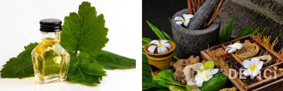 Масло пачули — всё о чудесных свойствах и применении