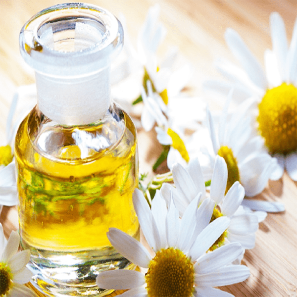 Масло ромашки — ТОП-15 целебных свойств и применение