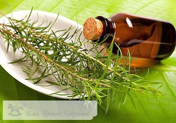 Масло чайного дерева: применение, свойства, рецепты, отзывы