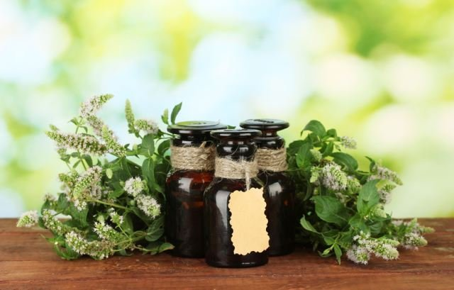 Масло мяты для волос: способы применения, полезные свойства, рецепты масок, отзывы