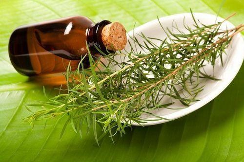Масло чайного дерева для волос — полный обзор вариантов применения