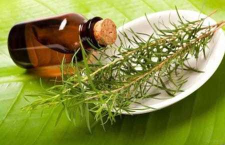 Масло чайного дерева от папиллом и бородавок: как избавиться, отзывы