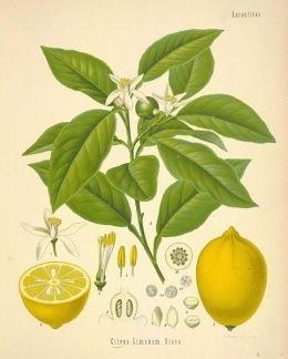 Эфирное масло лимона для волос: способы применения, рецепты, отзывы