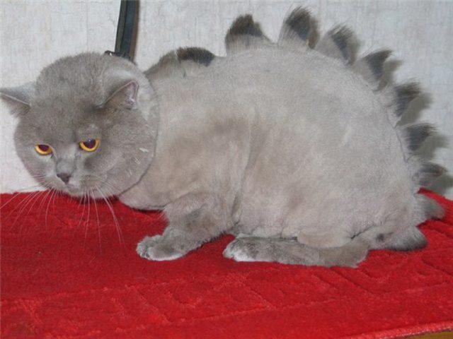 Машинка для стрижки кошек с густой шерстью: как подстричь кота, отзывы
