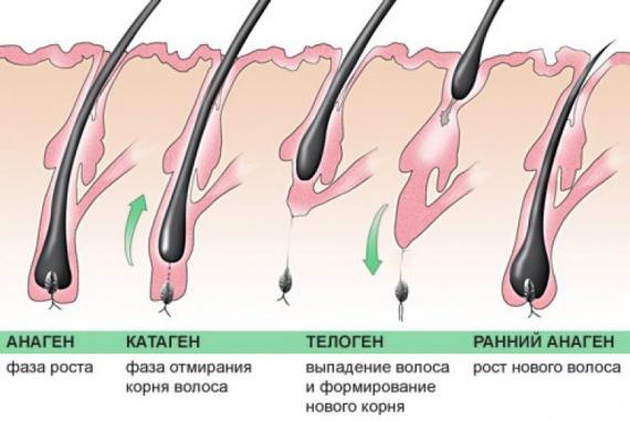Сыворотка для роста ресниц — лучшие для восстановления и укрепления