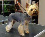 Машинка для стрижки собак: какой триммер лучше, отзывы