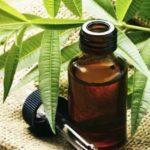 Масло чайного дерева для отбеливания зубов и ухода за деснами: советы по применению, отзывы