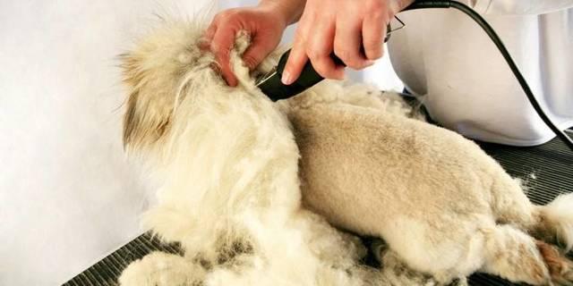 Машинка для стрижки животных: обзор моделей и отзывы