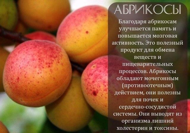 Абрикосовое масло для лица от морщин: свойства и применение, отзывы