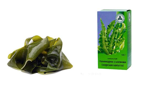 Водорослевое обертывание (с ламинарией и другими водорослями): польза, противопоказания, отзывы
